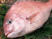 還暦ヒガシの沖釣りブログ