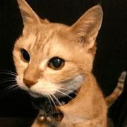 猫の慢性腎不全闘病記
