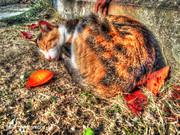 猫 風景写真 tamaphoto