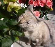 ぼちぼち透析、たまに猫。