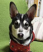 Mix犬 「空」sora と生きる。