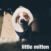 ハンドメイドわんこグッズ little mitten