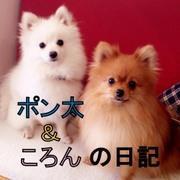 愛犬ポメラニアン:ポン太&ころんの日記