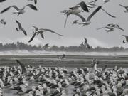 Heavn's Beachブログ 波乗り・写真・時々トリップ