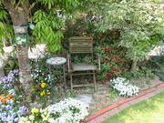 芝生とバラの庭