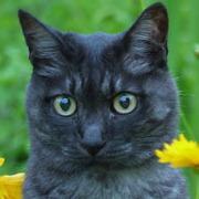 黒トラ猫のAz と 趣味の園芸