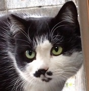 しっぽが無いからウサギみたいな白黒猫ちゃんblog