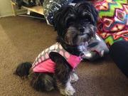 Tipsy's mama blog