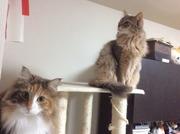 ソマリージャンな猫blog