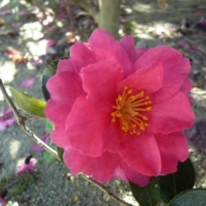 人・自然・愛のふれあう癒しのブログ