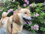 NEW 北海道犬 琳