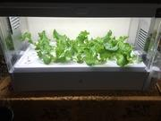 GreenFarmで野菜をつくろう