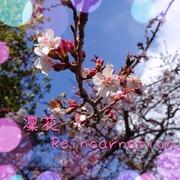 縁切りと縁結びの凜花〜Reincarnation〜