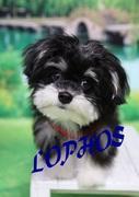 MIX犬ロポスです♪マルチワワのダイアリー