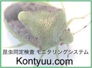 Kontyuu.comスタッフブログ