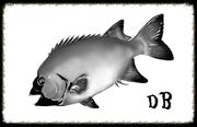 非行中年の石鯛釣り日記