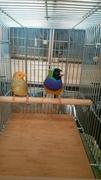 自育胡錦鳥(ドリームミニのブログ)