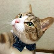 猫とまったり慶應通信