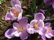 花木の成長・衰退記録