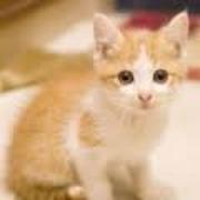 癒されるネコ猫動画
