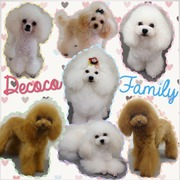 ♡Decoco trimmer's blog♡