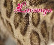 I Love ❤ Bengal