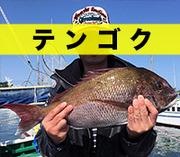 静岡発〜頭の中は釣りだらけ!