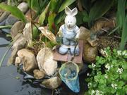 庭池のメダカ生活