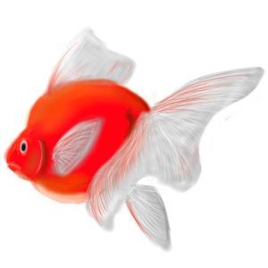 金魚と楽しく暮らすためのBlog