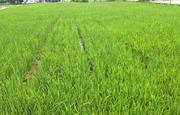 玄米・発芽玄米の力