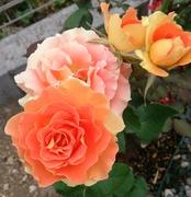 フクベリオンの薔薇と草花