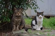 西麻布のネコ、ときどき青山・六本木
