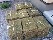 芝生 DIY