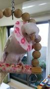 小鳥のおうち