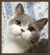ふぁ〜りぃにゃんこ  * cattery furrycats*