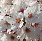 主婦だってひと花咲かせたい。