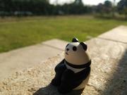 群馬芝生日記 〜猫と芝生の日記〜