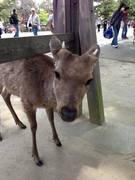 奈良鹿と香港猫の語学サロン