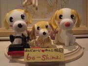 be-shimaiさんのプロフィール