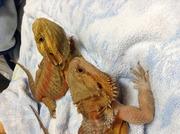 ナイル熱帯魚ブログ