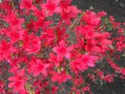 俺の庭 fumigarden