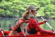 犬と猫と自然と…