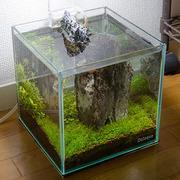 水草観察日記 miniaqua
