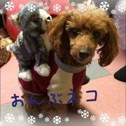 保護犬アルトとソプラノ♪高知県で農家のワンコになる
