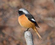 野鳥観察記録