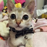 美猫!cocoにゃんの成長日記
