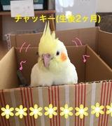黄色いコ鳥たち
