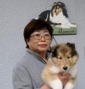 コリー犬・きな子と助産婦の育児奮闘記2015年版