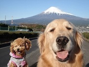 チャコの看板犬日記♡シホとゴル女メイのブログ