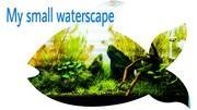 My small waterscape 〜小型水槽でネイチャーアクアリウム〜